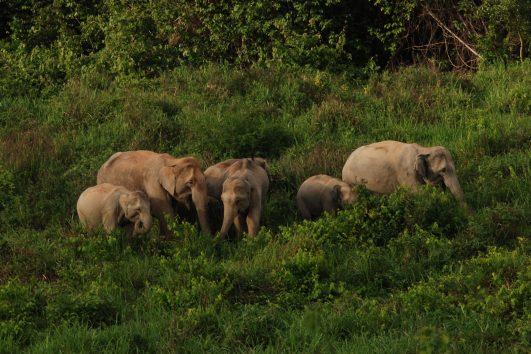 elephantkuiburi