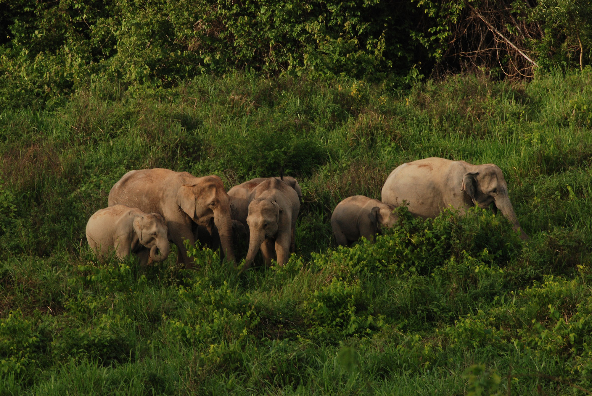 Elephant Watching at Kui Buri ( HH31 )