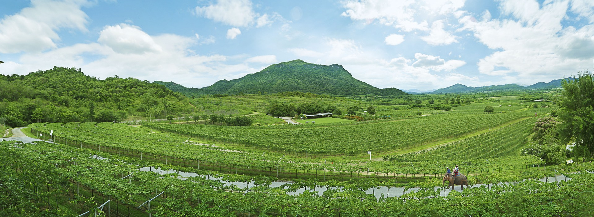 Hua Hin Hills Vineyard ( HH26 )