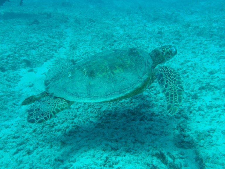 turtle-17918